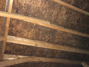 attic mold pre-inspection